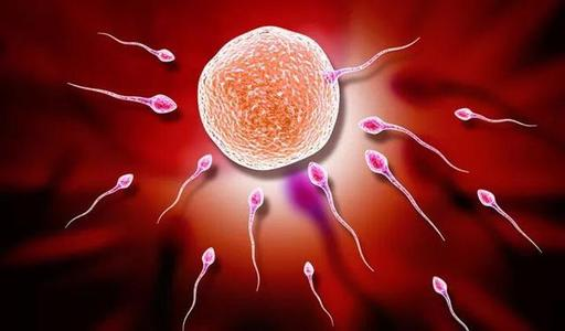女方卵巢不好做试管二次移植成功受孕